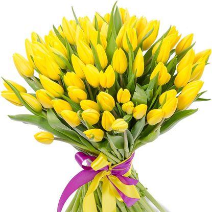 Изображение 51 желтый тюльпан