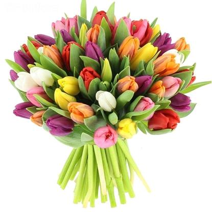 Изображение 51 разноцветный тюльпан
