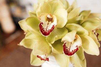 Зображення Орхідея