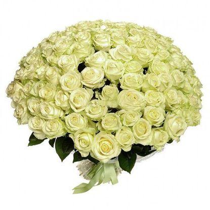 Изображение 101 біла троянда