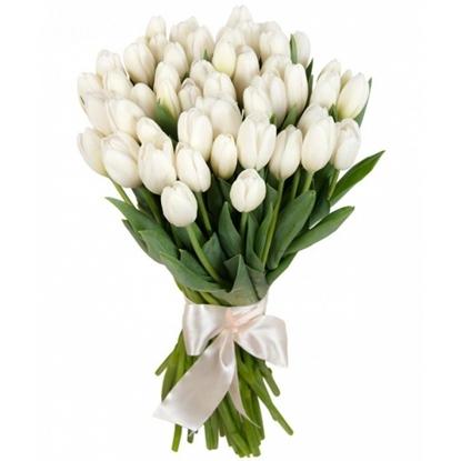 Изображение 51 белый тюльпан